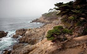 Обои море, деревья, пейзаж, природа, гора, склон, холм