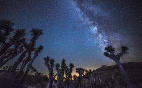 Обои природа, звезды, пространство, деревья, млечный путь