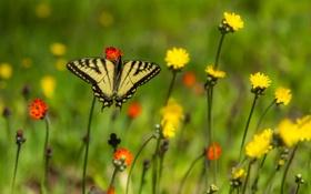 Обои бабочки, цветы, крылья