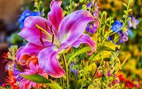 Обои стиль, розовая, лилия, букет