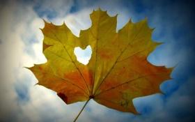 Обои небо, листья, желтый, настроения, сердце, листик, листочек