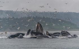 Картинка туман, дождь, чайки, горбатые киты