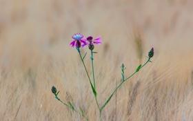 Картинка поле, цветок, трава, макро, луг