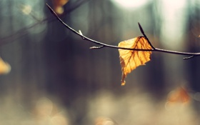 Картинка осень, макро, природа, фон, обои, ветка, листик