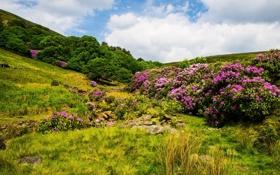 Обои небо, облака, деревья, цветы, камни, холмы, кустарники