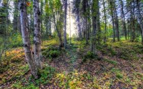 Обои лес, деревья, листва, солнечный свет