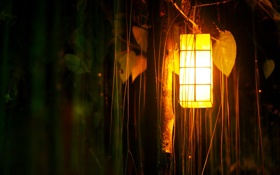 Обои лес, свет, фонарь