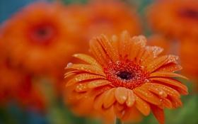 Картинка вода, капли, макро, роса, лепестки, сад, клумба