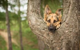 Обои друг, дерево, взгляд, собака