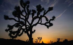 Картинка небо, закат, дерево, пустыня, кактус, горизонт, силуэт