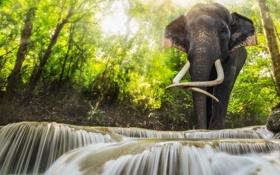 Картинка зелень, лес, вода, солнце, свет, река, слон