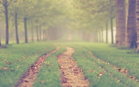 Картинка дорога, трава, деревья, сад, дорожка, аллея