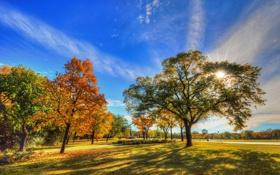 Картинка листья, облака, осень, трава, деревья, небо, парк