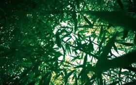 Обои зелень, листья, свет, ветки, природа, заросли, бамбук