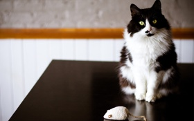 Обои кошка, кот, стол, игрушка, черно-белая, мышь, мышка