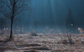 Обои лучи, ночь, туман, камыши, дерево, утро, сумерки