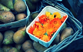 Обои цветы, фрукты, оранжевые, груши, календула