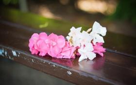 Обои любовь, цветы, скамейка, розовый, романтика