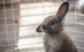 Картинка серый, клетка, кролик, крольчонок