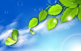 Обои листья, коллаж, бабочка, ветка, пузырек
