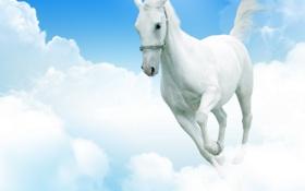 Картинка небо, облака, конь, ноги, небеса, лошадь, хвост