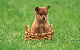 Картинка щенки, собаки, животные