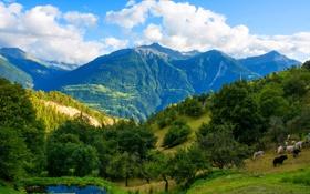 Обои лес, небо, облака, горы, Швейцария, Feschel