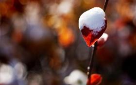 Обои красный, блики, веточка, листик, одинокая, под снегом