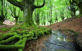 Обои лес, природа, ручей, мох