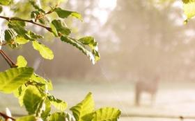 Картинка лето, листья, макро, природа, паутина, день, зеленые