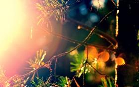 Обои лес, цвета, солнце, лучи, сосна, by mike pro