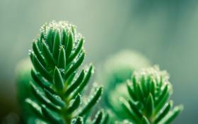 Обои капли, растение, зеленое