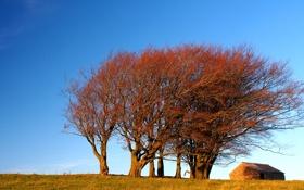 Обои осень, небо, деревья, дом, холм