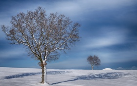 Обои деревья, тень, зима, поле, снег, небо