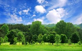 Картинка лес, небо, облака, деревья, пейзаж, природа, обои