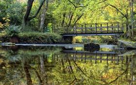 Картинка камни, река, River Forth, Шотландия, зелень, вода, мох
