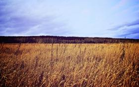 Картинка поле, небо, Природа, Екатеринбург