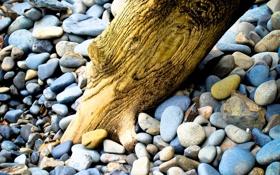 Обои пляж, макро, галька, камни, дерево, берег, бревно