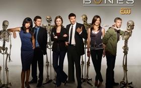 Обои кости, bones, сериал
