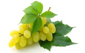 Обои желтый, крупный, Виноград
