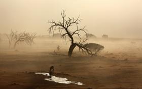 Обои песок, туман, пустыня, Африка, водопой, антилопы, Намиб