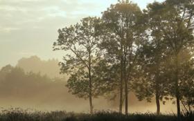 Картинка трава, деревья, туман, тишина, утро