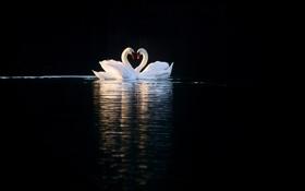 Картинка птицы, озеро, отражение, белые, лебеди