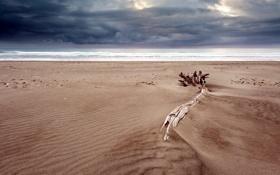 Картинка море, пляж, пейзаж, ночь, природа, бревно
