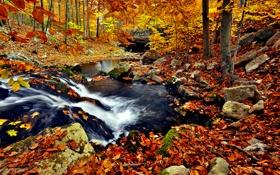 Картинка осень, природа, река, ручей, листва