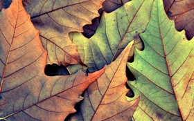 Картинка осень, фото, осенние обои, листок, листья, листки, фон