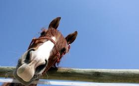 Обои забор, небо, макро, конь