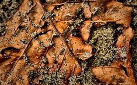 Обои листья, макро, фото, листок, листки, камешки, full hd