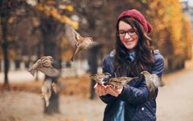 Картинка девушка, птицы, воробьи