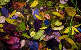 Обои капли, листья, осень, вода, роса